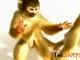 Mini-monkey screensaver