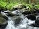 Watercourse Screensaver