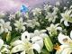 Flowers And Butterflies Screensaver