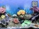 The Big Corals