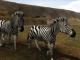 Safari Photo Africa - Wild Earth