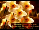 Spring with Bible Verses-Sample screen