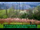 Spring with Bible Verses-Another sample screen