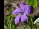 Wild Flowers Screen Saver