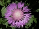 Free Flowers Screensaver