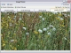 Semagsoft Image Viewer