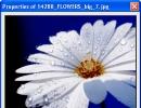 Image Properties Window