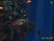 Sea Dive3D