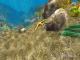 3D Ocean Fish © 7art-screensavers.com