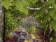 Forest Life 3D Screensaver