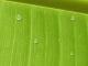 Water Drop Desktop Wallpaper