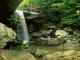 Jungle Falls Screensaver