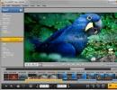 Video Splitter Window