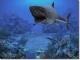 Sharks, Terrors of the Deep