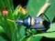 7art Crazy Bugs