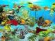 Guppies Deluxe Aquarium
