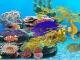 Sea Dragons Aquarium