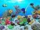 Undersea World Aquarium