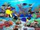 Atlantic Tang Aquarium