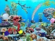 Blue Ocean Aquarium Wallpaper