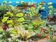 Clown Loach Aquarium