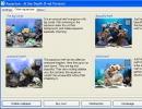 Different Aquariums.