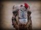 calm-camels