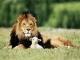 7art Leo the King